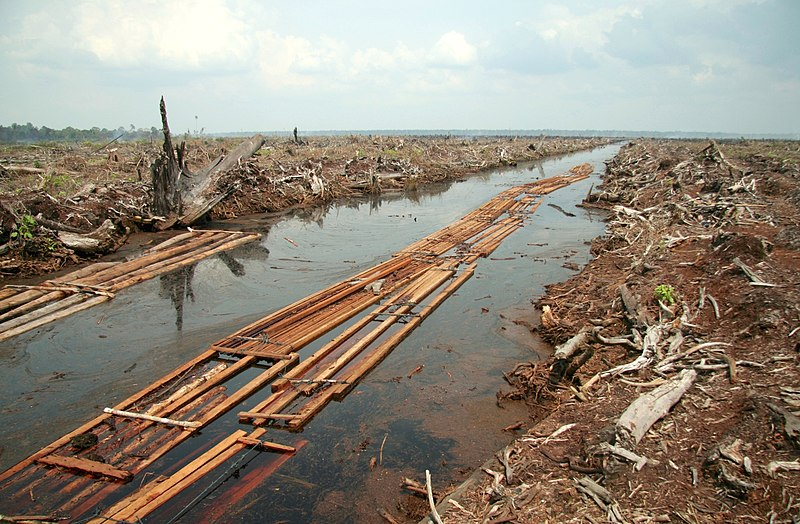Distruzione foreste biodiversità olio palma in Indonesia