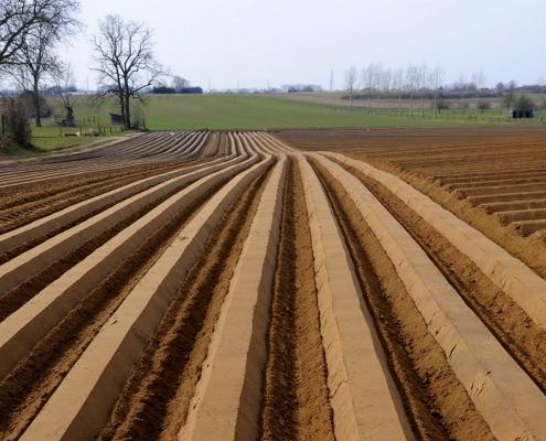 Un terreno coltivato in Belgio. FOTO: Françoise van Nieuwlandt - Archivio fotografico Commissione europea.