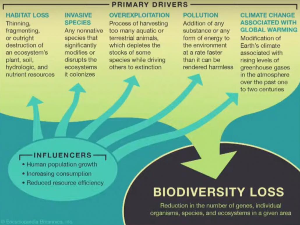 Quali sono i fattori principali di perdita della biodiversità? FONTE: Encyclopedia Britannica.