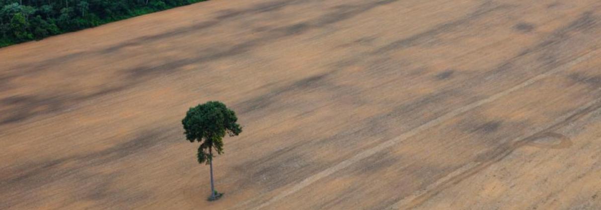 Una porzione di foresta tropicale spazzata via per fare spazio alle coltivazioni intensive destinate a biocarburanti. FOTO: Archivio Greenpeace.
