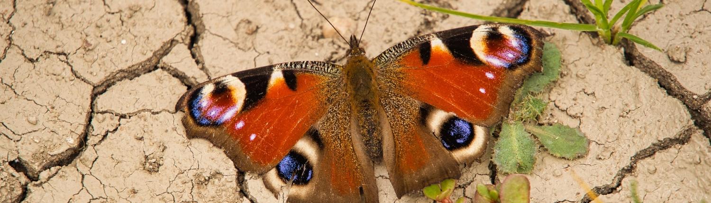 farfalle desertificazione suolo