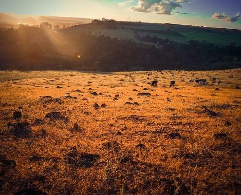 Nella sconfinata ecoregione brasiliana del Cerrado si collocano lotti dedicati alla coltura della soia con un estensione di oltre 10 mila chilometri quadrati ciascuno. Foto: Rafael Ribeiro Attribution-ShareAlike 4.0 International (CC BY-SA 4.0)