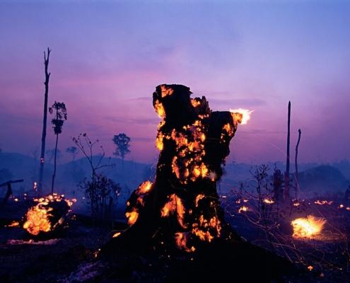La deforestazione è un tipico fenomeno correlato al land grabbing. Foto: JOHN MAIER, JR. / Still Pictures Attribution-NonCommercial 2.0 Generic (CC BY-NC 2.0) https://creativecommons.org/licenses/by-nc/2.0/
