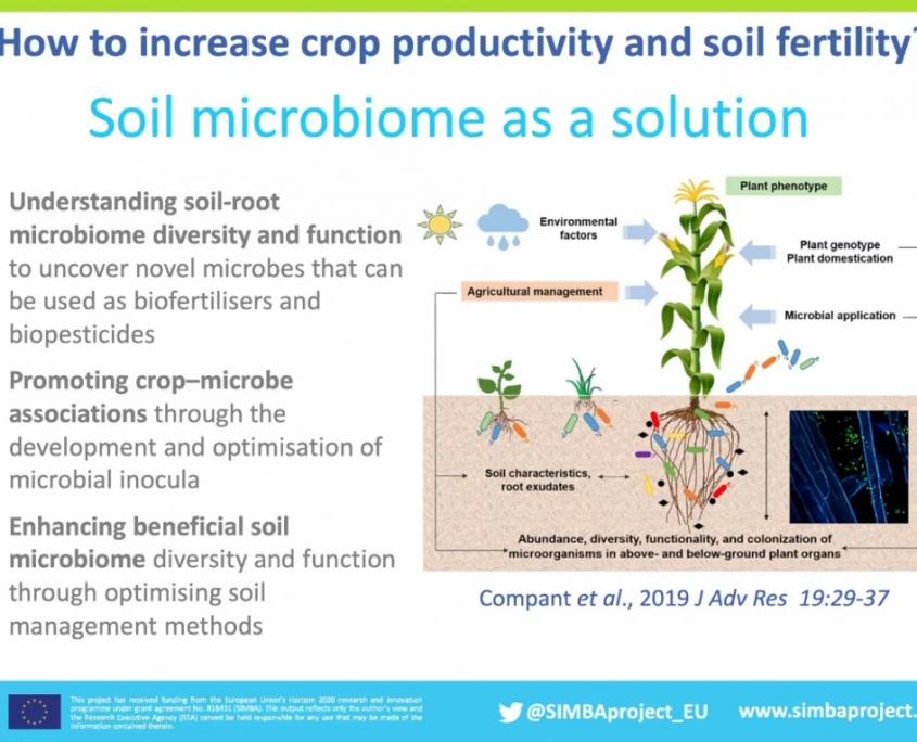Analizzando il microbioma e progettando i consorzi di microorganismi più promettenti è possibile migliorare la produttività e la salute del suolo e delle piante. Immagine: presentazione di Annamaria Bevivino (ENEA) presso Ecomondo 2020.