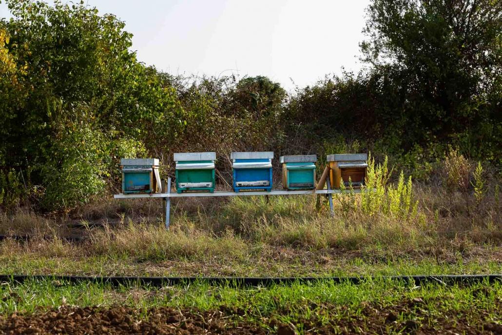 La Foresta commestibile di Partinico (PA) ospiterà anche corridoi verdi destinati a stimolare la presenza degli insetti impollinatori.