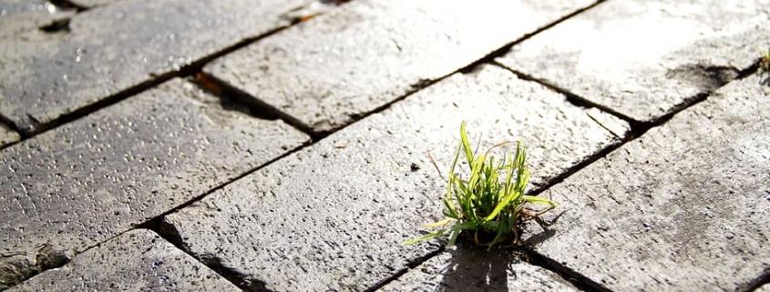 Il soil sealing è una costante minaccia globale. Foto: Pxfuel, Free for commercial use, DMCA