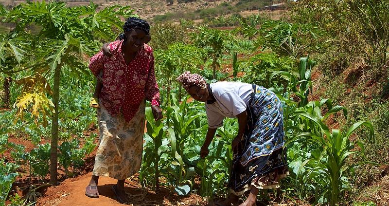 Le donne rappresentano dal 60% all'80% dei piccoli agricoltori del Pianeta. Ma in Europa soltanto le aziende agricole è a guida femminile sono solo il 29% del totale. Foto: McKay Savage from London, UK Attribution 2.0 Generic (CC BY 2.0)