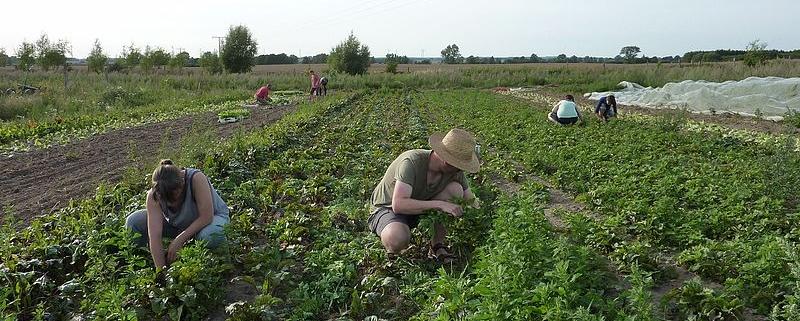Il settore dell'agricoltura biologica europea è in crescita da anni con l'Italia nel ruolo di leader continentale. Foto: Smaack Attribution-ShareAlike 4.0 International (CC BY-SA 4.0)