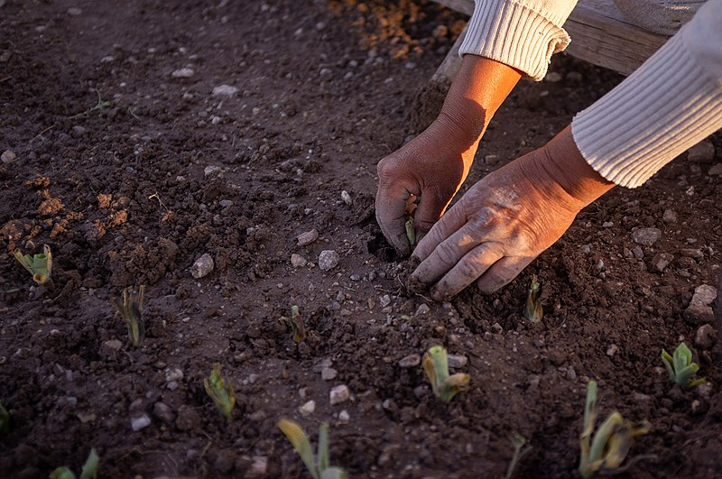 L'agroecologia concilia sapere antico e scienza moderna. Foto: Cristian Jiménez L. Attribution-ShareAlike 4.0 International (CC BY-SA 4.0)