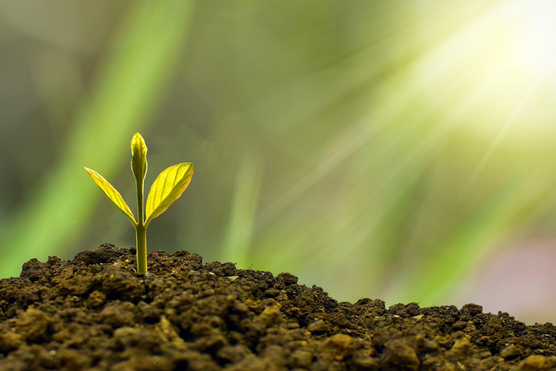 Bioeconomia, economia circolare, green deal