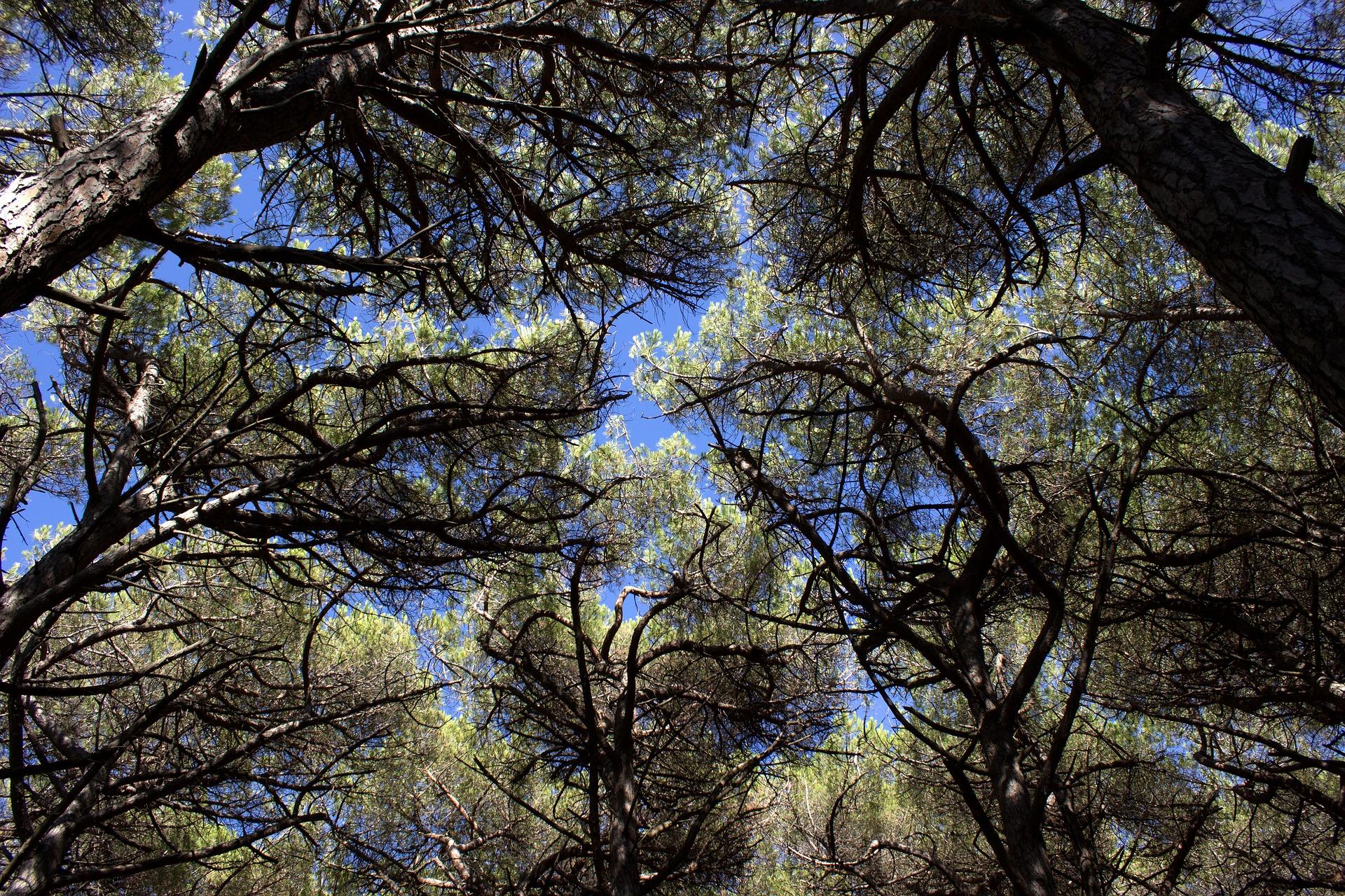 Foresta boschi alberi