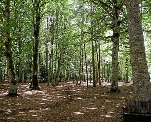 Le foreste svolgono un ruolo fondamentale nella mitigazione del clima e nella tutela della salute del suolo. In Italia coprono quasi il 40% del territorio nazionale. Foto: Mboesch Attribution-ShareAlike 4.0 International (CC BY-SA 4.0)