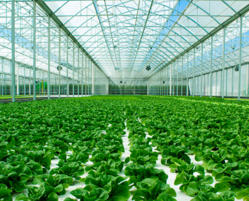 """L'interno della """"serra attiva"""" di Sfera Agricola, in cui l'uso dell'idroponica e il recupero delle acque piovane permette di ridurre i consumi idrici del 90%. FOTO: Sfera Agricola."""