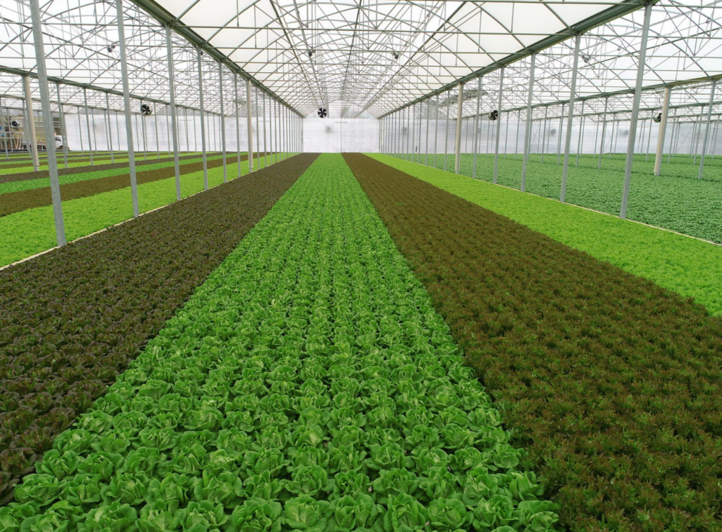 Nella sua Serra Attiva, Sfera Agricola coltiva pomodori, insalate ed erbe aromatiche senza l'uso di fitofarmaci. FOTO: Sfera Agricola.