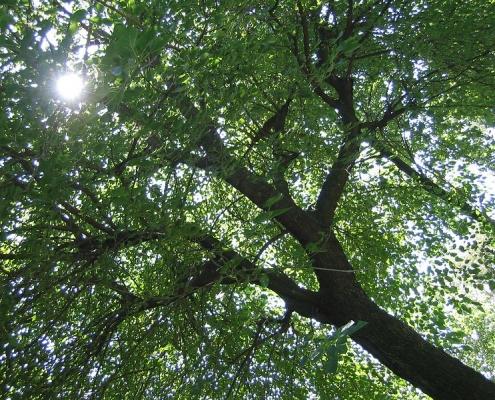 Il progetto della Regione prevede l'innesto di quattro milioni e mezzo di alberi entro il 2025. Foto: Roberto Ferrari, Flickr, Attribution-ShareAlike 2.0 Generic (CC BY-SA 2.0)