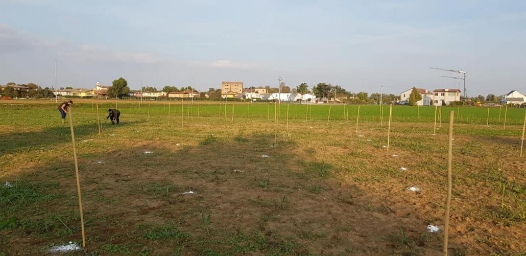 Il risultato della piantumazione del bosco di Roncajette - frazione del Comune di Ponte San Nicolò, PD.