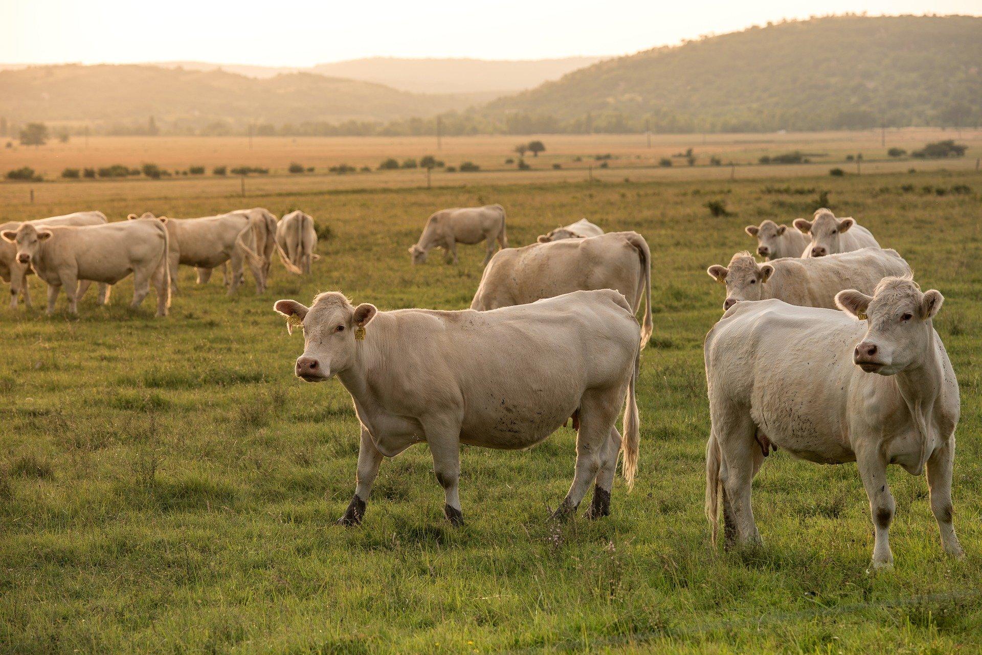 Le opzioni di mitigazione basate sul settore agricolo, specialmente di piccola scala, possano portare all'azzeramento delle emissioni delle aziende zootecniche. FOTO: milesz da Pixabay