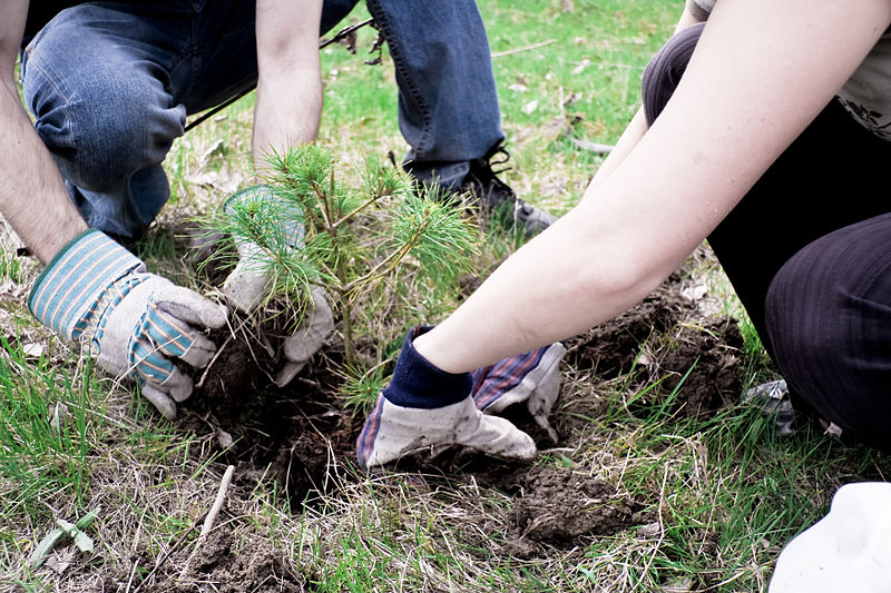 Looking for a perfect reforestation? Just follow these 10 rules