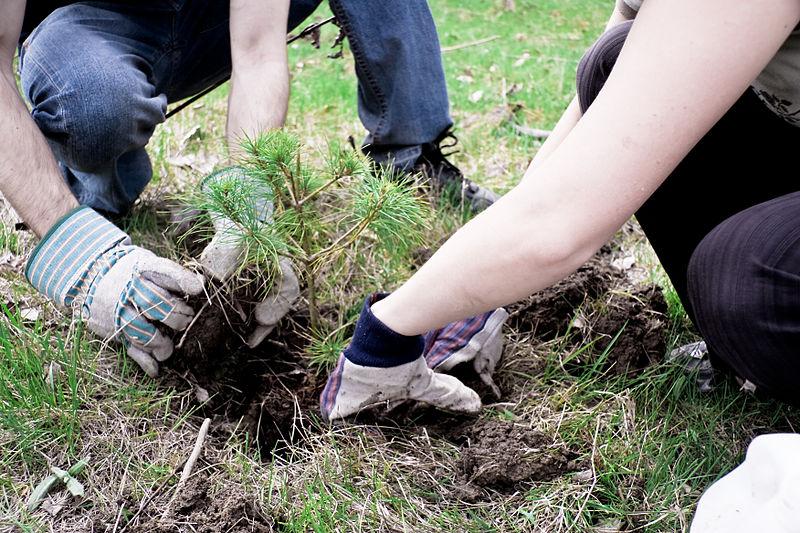 La protezione della foresta esistente è la prima regola per una riforestazione efficace. Foto: Alex Indigo Copyright: Creative Commons Attribution 3.0 License