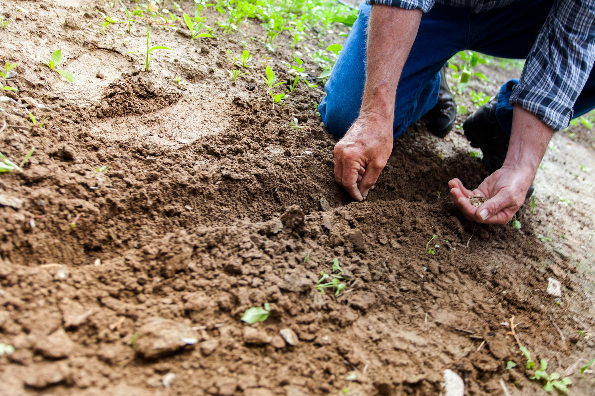Far tornare in salute il 75% dei suoli europei: è l'obiettivo principale della Mission Soil dell'Unione europea.