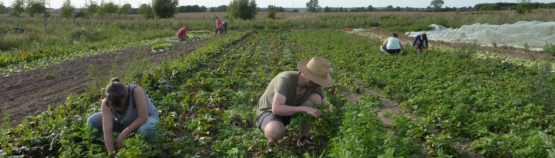 L'EJP SOIL Programme UE punta a sviluppare soluzioni per una gestione intelligente dei suoli agricoli a tutela del clima