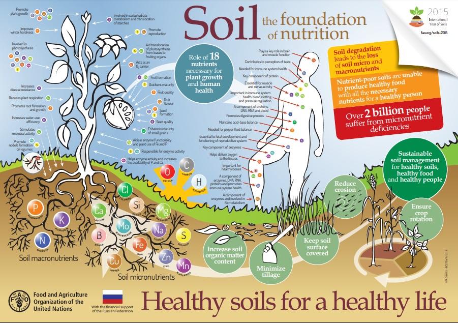 Fame invisibile per 2 miliardi di persone. Il degrado del suolo genera una perdita di micronutrienti essenziali. Immagine: FAO 2015. Creative Commons 3.0 Intergovernmental Organization (IGO)