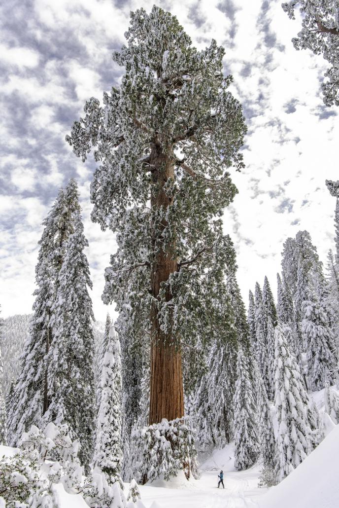 USA deforestazione alberi foreste boschi inverno neve