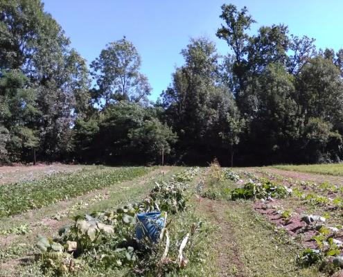 Uno dei terreni recuperati e resi nuovamente produttivi dall'azienda agricola VegaGè nell'ambito del progetto Terre AbbanDonate. FOTO: Terre AbbanDonate