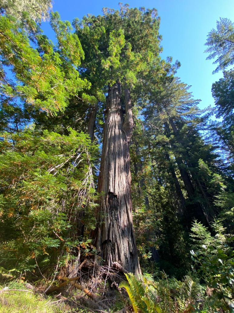USA deforestazione alberi foreste