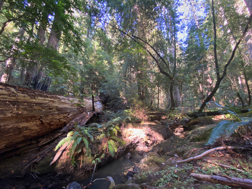 USA deforestazione alberi foreste boschi