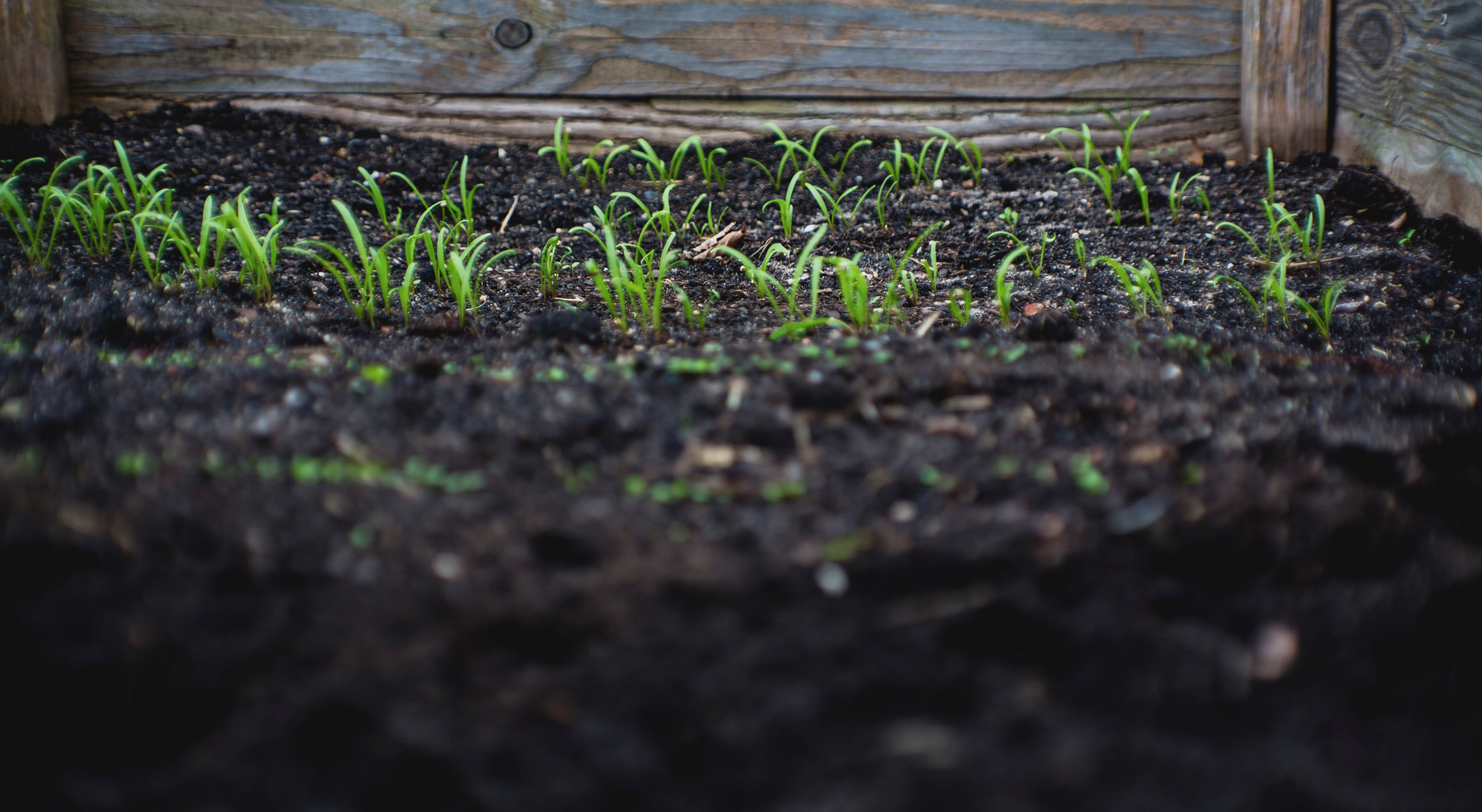 After many years of debate, FAO's Intergovernmental Technical Group on Soils has approved an official definition of healthy soil. PHOTO: FAO archive.