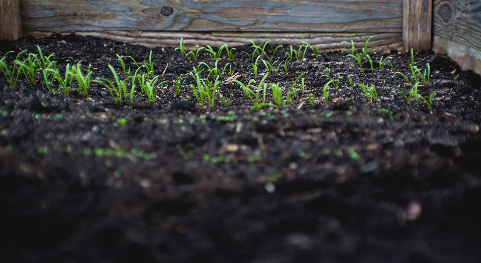 Dopo molti anni di dibattito, Il gruppo tecnico intergovernativo sui suoli della FAO ha approvato una definizione ufficiale di suolo sano. FOTO: archivio FAO.