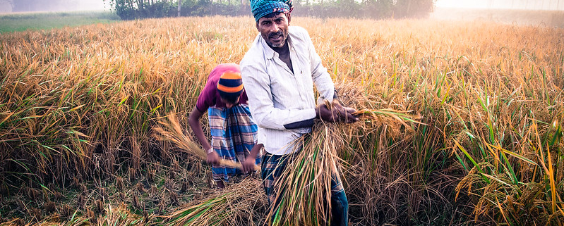 """A farmer at work in Bangladesh. Also operating in Malawi and Burkina Faso, FAO's project in the Asian country aims to tackle micronutrient deficiencies in the soil that lead to so-called """"hidden hunger"""". Photo: Ben Pederick, Good Morning Beautiful Films Attribution 2.0 Generic (CC BY 2.0)"""