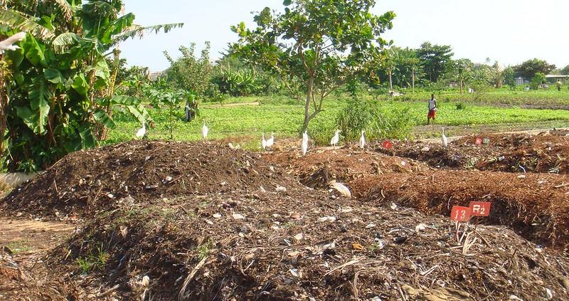 Prodotti come il compost possono far crescere la fertilità e il sequestro di carbonio. Ma i livelli di ritenzione e di emissioni dipendono da moltissimi fattori. Foto: Falk Negrazius Attribution 2.0 Generic (CC BY 2.0)