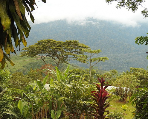 Costa Rica unveiled two measures designed to re-carbonise soils, and cash environmental services under the RECSOIL program. Photo: Åsa Berndtsson Attribution 2.0 Generic (CC BY 2.0)