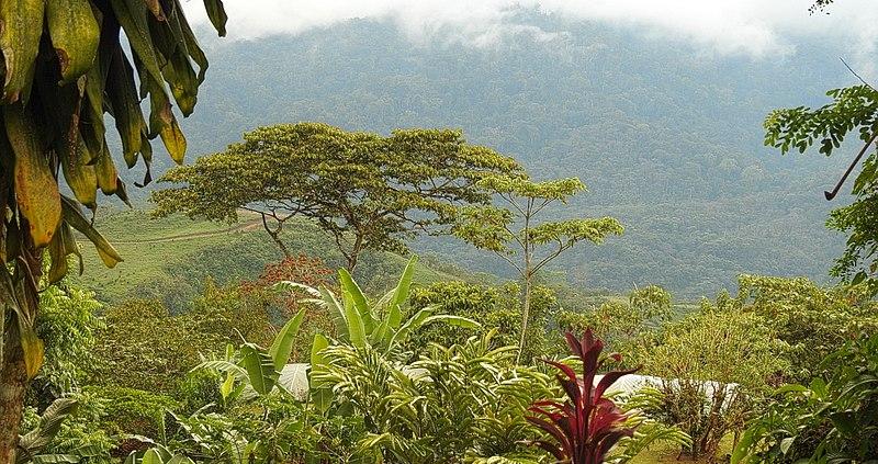 Il Costa Rica ha presentato le due misure promosse nell'ambito del programma RECSOIL per ricarbonizzare i suoli, e monetizzare i servizi ambientali. Foto: Åsa Berndtsson Attribuzione 2.0 Generico (CC BY 2.0)