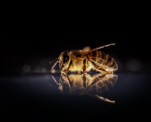Api miele pesticidi insetti impollinatori