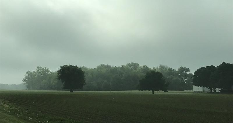 Secondo un gruppo di scienziati USA lo studio del suolo ci consentirà di prevedere il comportamento degli alberi nella mitigazione del clima. Foto: Aiko, Thomas & Juliette+Isaac Attribution 2.0 Generic (CC BY 2.0)
