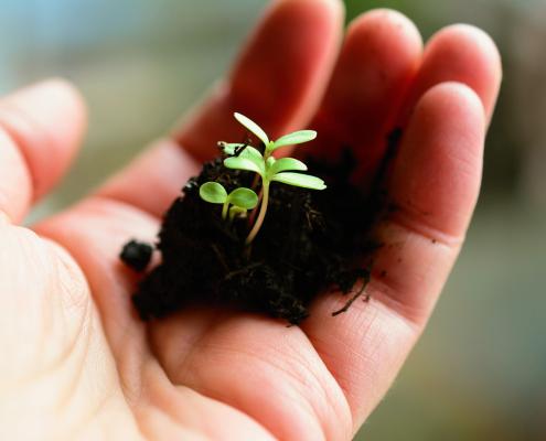 La sostanza organica è un elemento fondamentale per la funzionalità del suolo, cioè della sua fertilità. FOTO: congerdesign da Pixabay