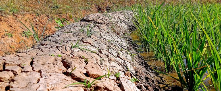 Different management strategies and soil properties influence carbon sequestration ability. Data processing is therefore crucial in order to design a global soil map. Photo: Nandan CC0 - Free to Use, Attribution Optional