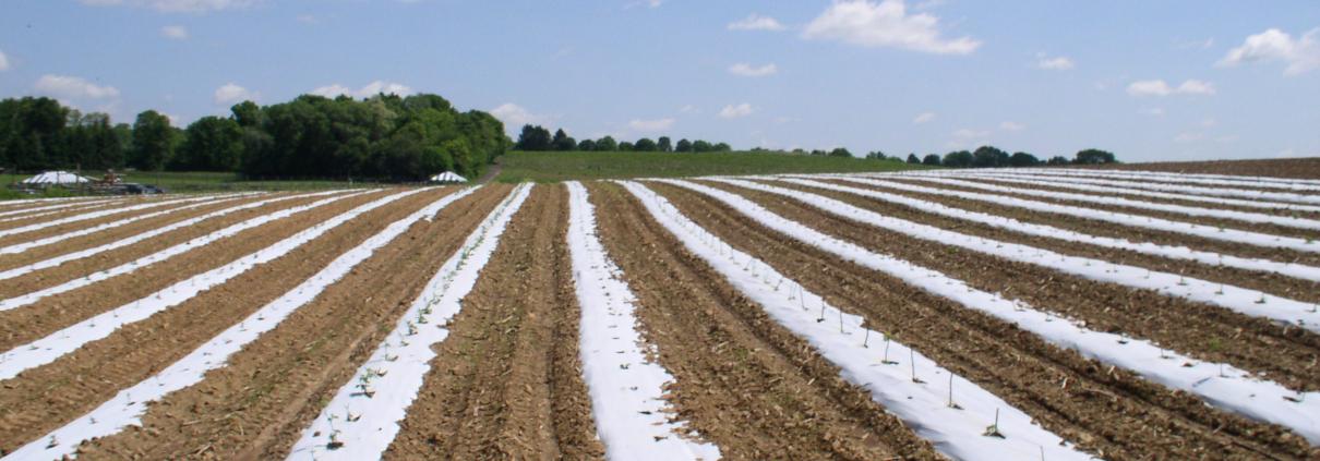 agricoltura plastica teli pacciamatura