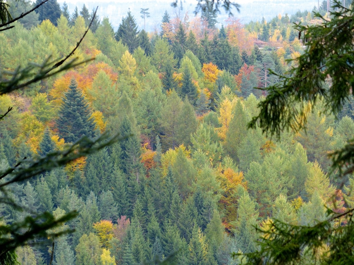 Forest coverage in Europe has grown 9% since 1990. Photo: Roman Boed Attribution 2.0 Generic (CC BY 2.0) Free for personal and commercial use Attribution required