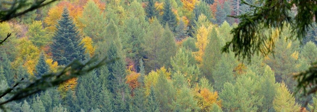 Negli ultimi 30 anni la superficie coperta dalle foreste nel Vecchio Continente è aumentata del 9%. Foto: Roman Boed Attribution 2.0 Generic (CC BY 2.0) Free for personal and commercial use Attribution required