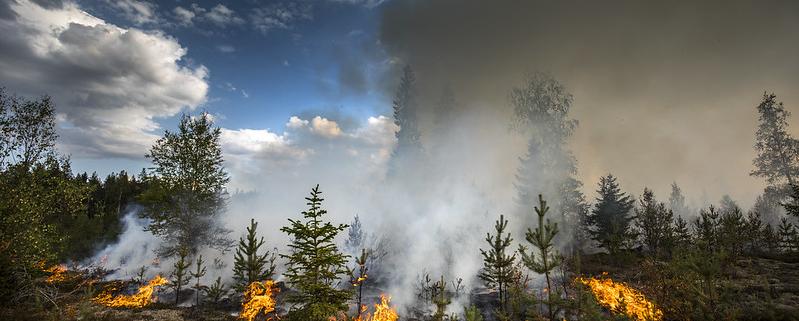 Tra il 2019 e il 2020 il numero di incendi e l'area bruciata hanno superato la media degli ultimi dodici anni. Foto: Pavel Koubek © European Union 2018 Attribution-NonCommercial-NoDerivs 2.0 Generic (CC BY-NC-ND 2.0) https://www.flickr.com/photos/eu_echo/42117320380