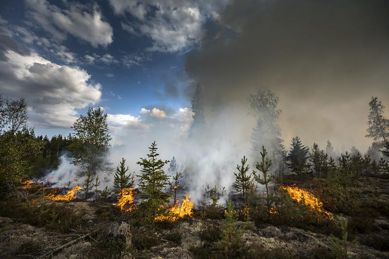 Tra il 2019 e il 2020 il numero di incendi e l'area bruciata hanno superato la media degli ultimi dodici anni. Foto: Pavel Koubek © European Union 2018 Attribution-NonCommercial-NoDerivs 2.0 Generic (CC BY-NC-ND 2.0)