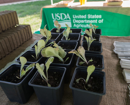 Seed and seedling production in the United States is still inadequate to meet reforestation goals. Photo: Lance Cheung, USDA public domain https://www.flickr.com/photos/usdagov/22021263075