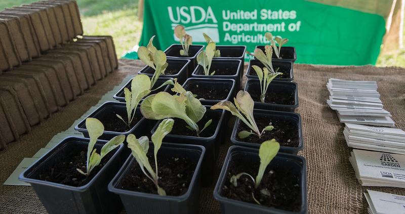 Negli Stati Uniti la produzione di semi e piantine è ancora inadeguata rispetto agli obiettivi di riforestazione. Foto: Lance Cheung, USDA dominio pubblico