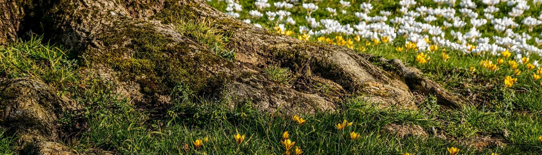 La Mission Soil dell'Unione europea ha proposto 6 indicatori fondamentali per verificare la qualità di un suolo. FOTO: suju-foto da Pixabay