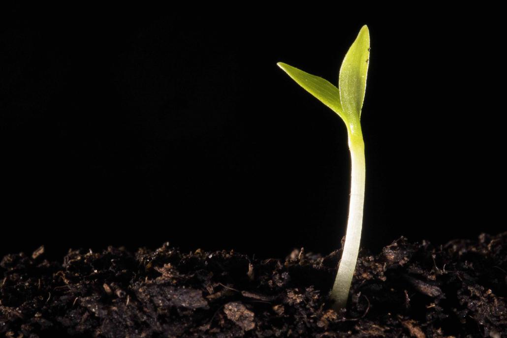biodiversità piante nascita suolo erba natura nascita
