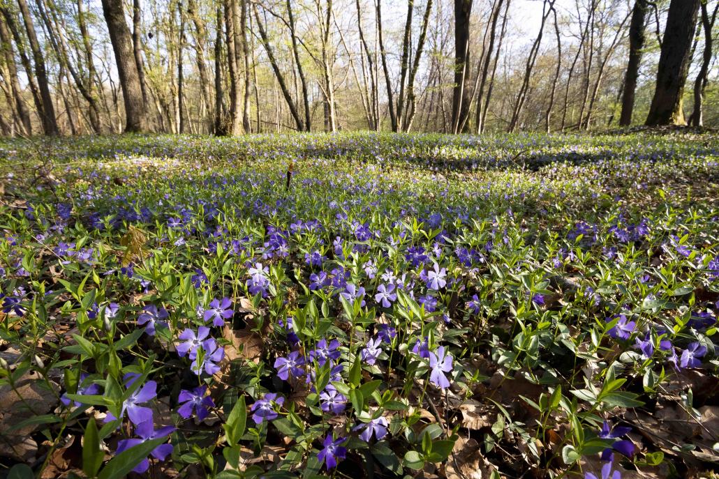 biodiversità piante nascita suolo erba natura nascita fiori
